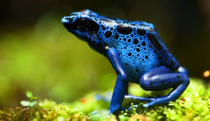 frog_dynamic_lead_hero_image